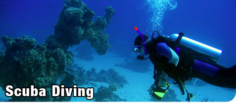 Person Scuba Diving Near Coral Holding an Underwater Camera